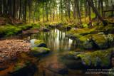 Reflections at a creek 2
