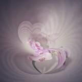 Orchids....