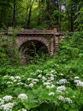 Bridge Over Wildflowers
