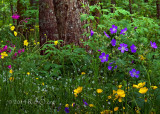 breitnau-forest-wildflower-scene