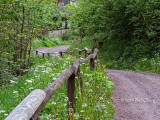 breitnau-forest-path