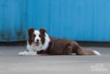 Hond-2019001.jpg