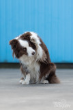 Hond-2019004.jpg