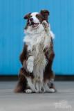 Hond-2019005.jpg