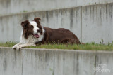 Hond-2019008.jpg