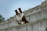 Hond-2019009.jpg