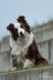 Hond-2019010.jpg