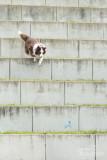 Hond-2019013.jpg