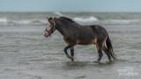 Paarden-2019001.jpg