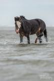 Paarden-2019003.jpg