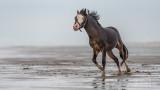 Paarden-2019004.jpg