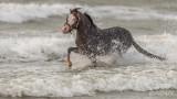 Paarden-2019006.jpg