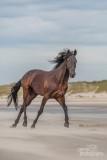 Paarden-2019009.jpg