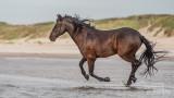 Paarden-2019011.jpg