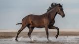 Paarden-2019012.jpg