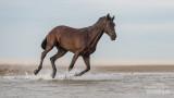 Paarden-2019013.jpg