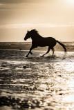 Paarden-2019014.jpg