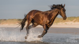 Paarden-2019015.jpg