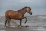 Paarden-2019020.jpg