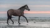 Paarden-2019022.jpg