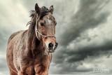 Paarden2020-2020001.jpg