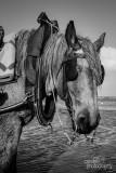Paarden2020-2020003.jpg