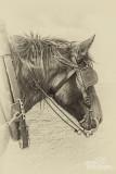 Paarden2020-2020004.jpg