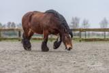 Paarden2020-2020005.jpg