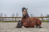 Paarden2020-2020007.jpg