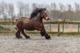 Paarden2020-2020009.jpg