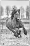Paarden2020-2020010.jpg