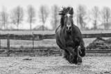 Paarden2020-2020012.jpg