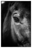 Paarden2020-2020017.jpg