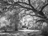 magnolia_plantation_infrared_