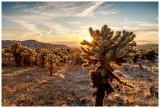 California Spring Break 2020: Joshua Tree, San Diego, Laguna Beach and LA