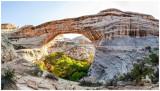 Cedar Mesa October 2020: The Citadel, Moon House, and Natural Bridges National Monument