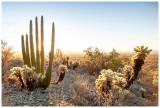 Organ Pipe Cactus National Monument January 2021