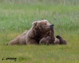 Grizzly Bear & cub