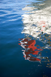 Ensign's Reflection On The Water