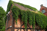 An Old House And Vine