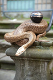 Snake In Public Space