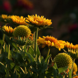 Yellow Flower Gallery