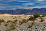 Death Valley Through the Years