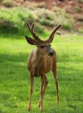Deer Gallery