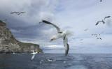 P1260127_Noss_Shetland.jpg