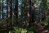 Oregon Redwood Groves, 10-2019