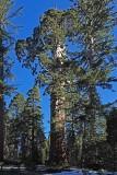 Kings Canyon National Park, Feb 2020
