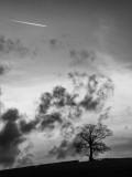 Tree, clouds, plane