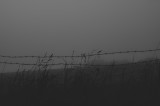 Early morning mist and my fascination with barbed wire.