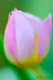 Les fleurs du confinement
